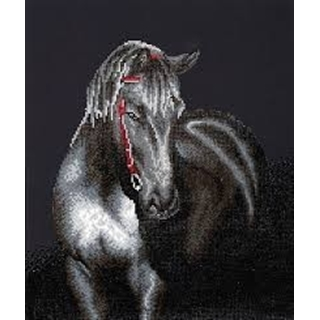Midnight Stallion  42 x 53cm