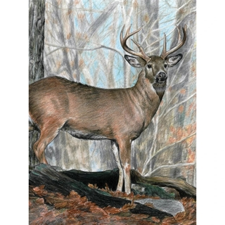 A4 - WHITETAIL BUCK